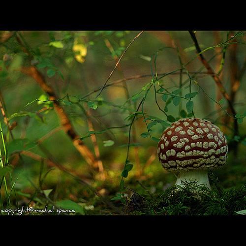 фотографии грибов (28)