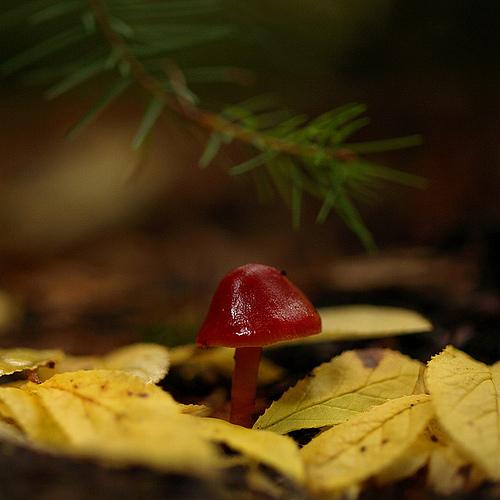 фотографии грибов (27)