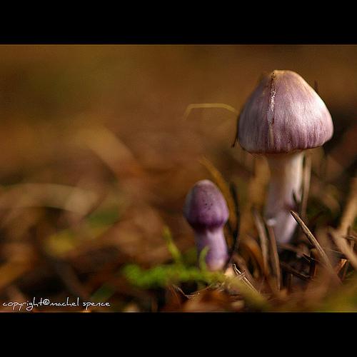 фотографии грибов (25)