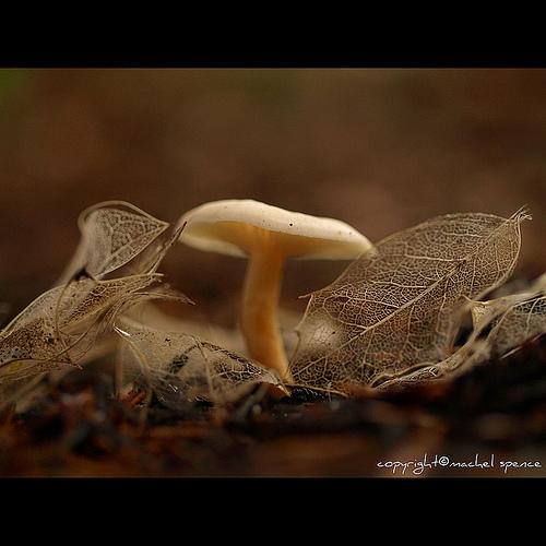 фотографии грибов (24)