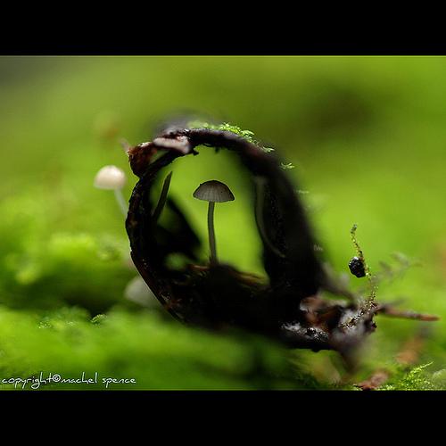 фотографии грибов (23)