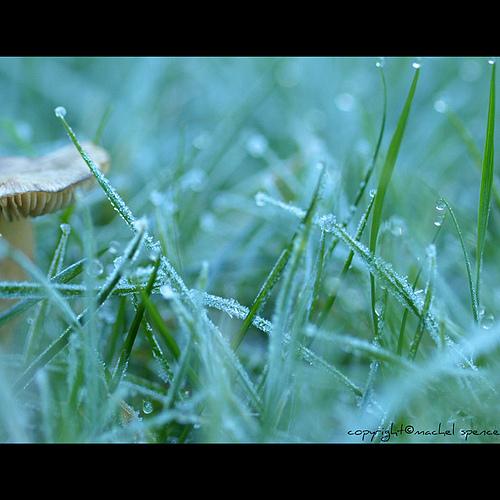 фотографии грибов (21)