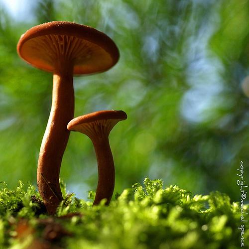 фотографии грибов (83)
