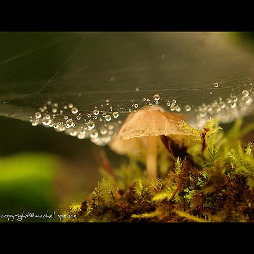фотографии грибов (20)