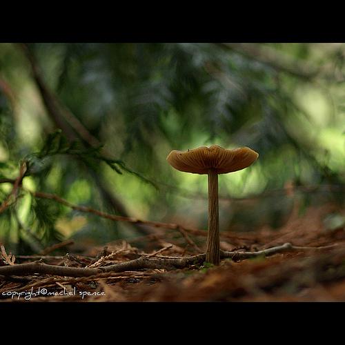 фотографии грибов (19)
