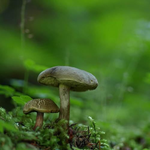 фотографии грибов (18)