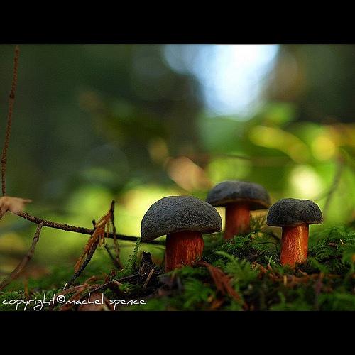 фотографии грибов (17)