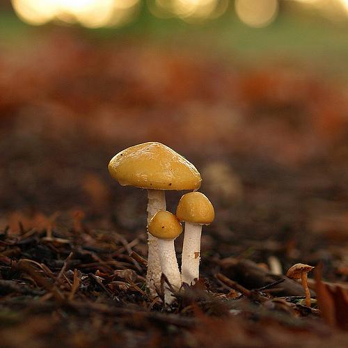 фотографии грибов (16)