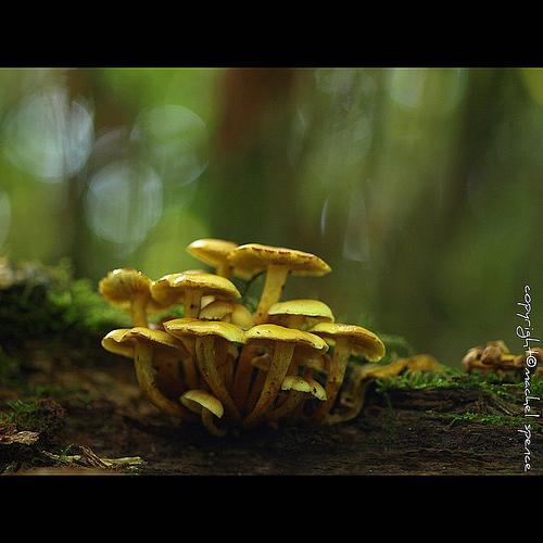 фотографии грибов (15)