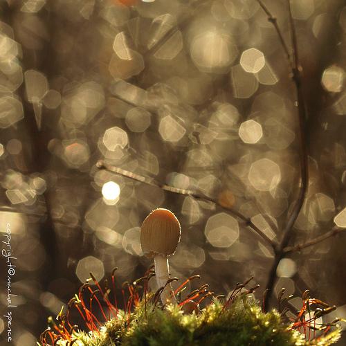 фотографии грибов (14)