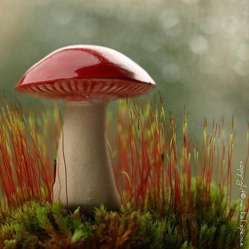 фотографии грибов (13)