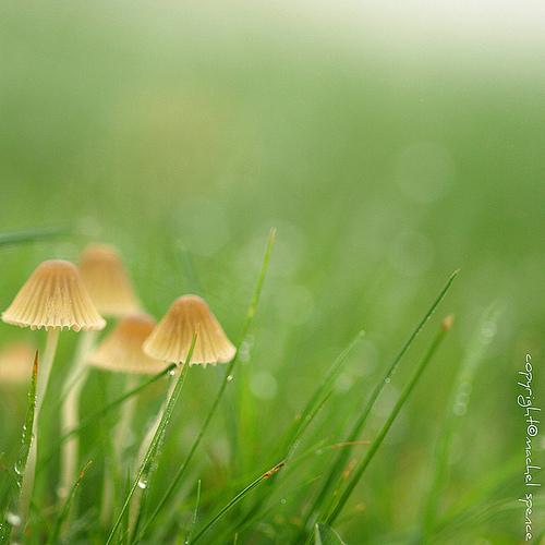фотографии грибов (12)