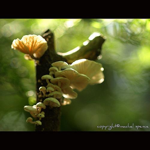 фотографии грибов (9)