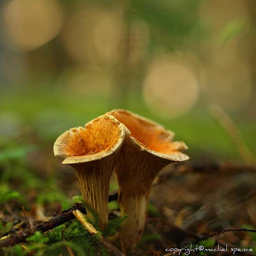 фотографии грибов (8)