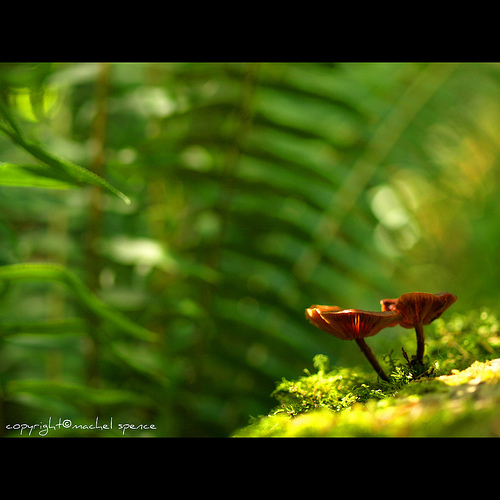 фотографии грибов (7)