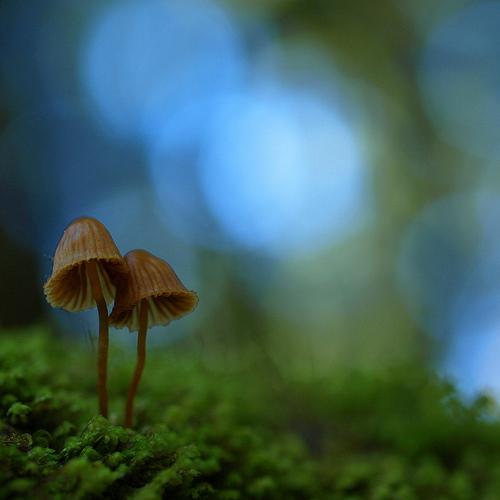 фотографии грибов (6)