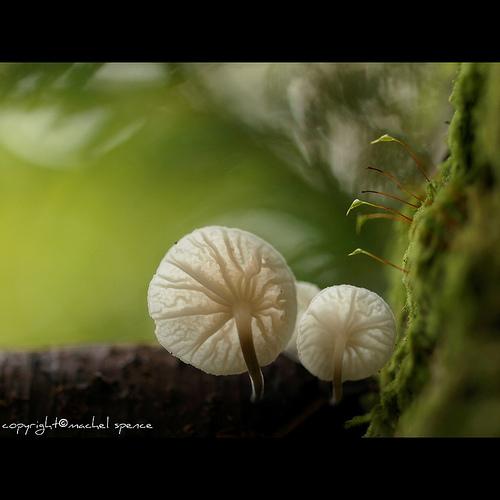 фотографии грибов (5)