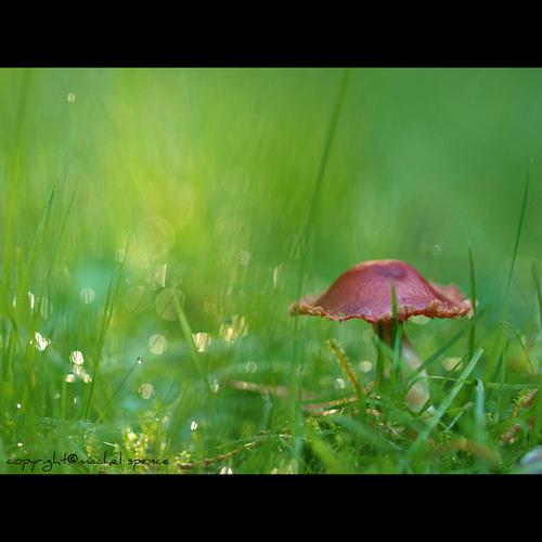 фотографии грибов (2)
