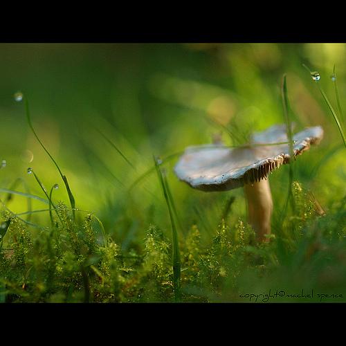 фотографии грибов (1)