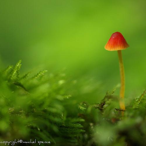 фотографии грибов (81)