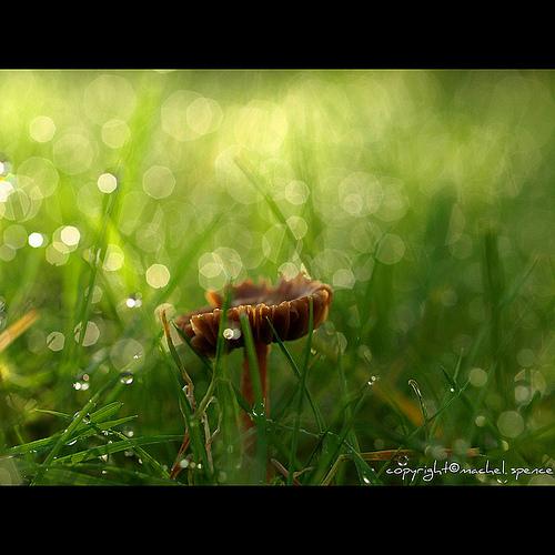 фотографии грибов (96)