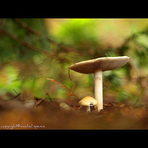 фотографии грибов (95)