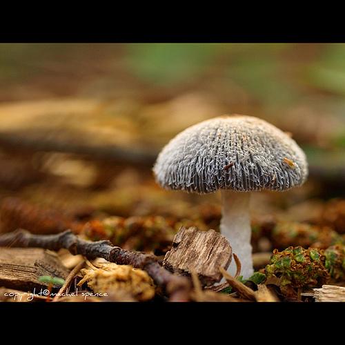 фотографии грибов (94)