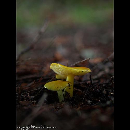 фотографии грибов (93)