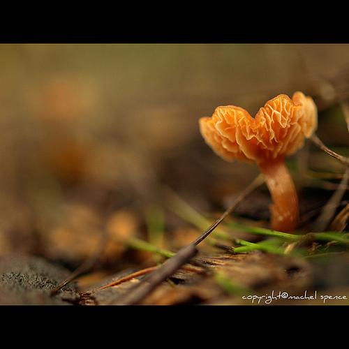 фотографии грибов (92)