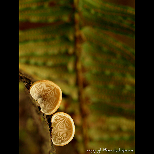фотографии грибов (91)