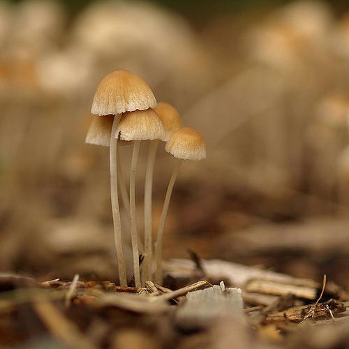 фотографии грибов (90)
