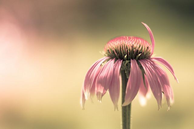 красивые фотографии цветов
