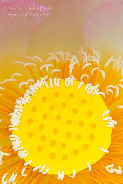 Самые красивые фотографии цветов