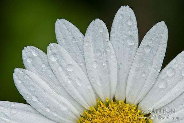 Фото весенних цветов от nikhil bahl