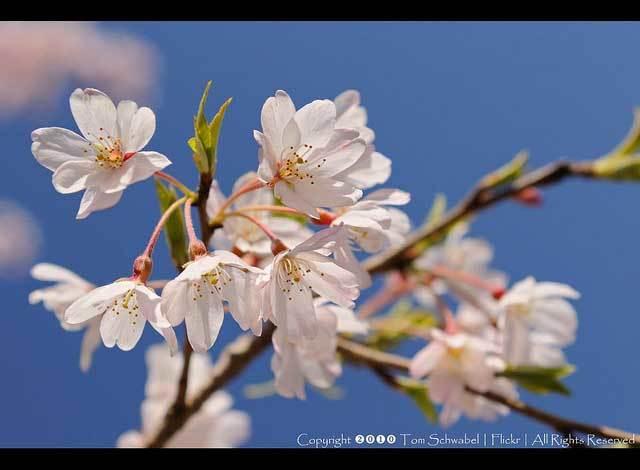 Красивые фото Японии (12)
