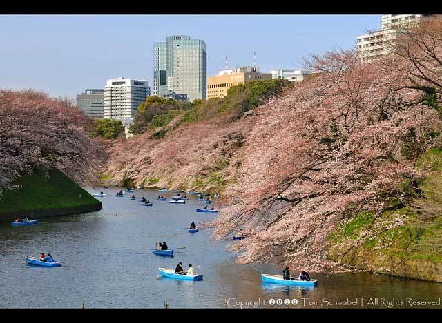 Красивые фото Японии (15)