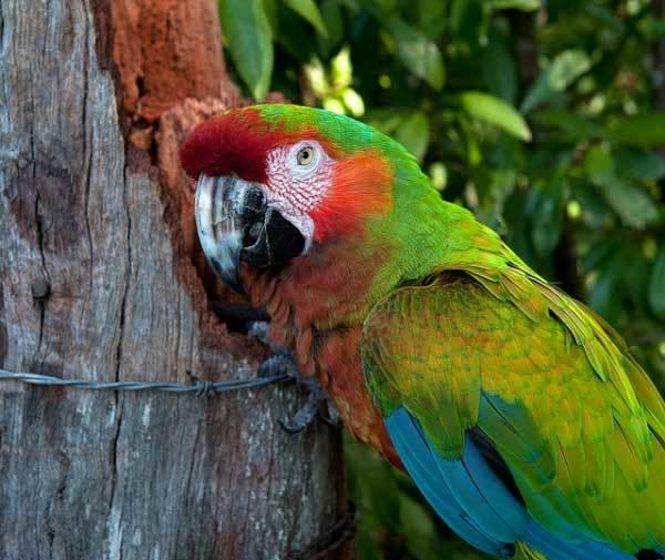 остров мауи фото (9)