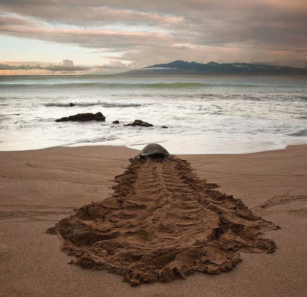 остров мауи фото (12)