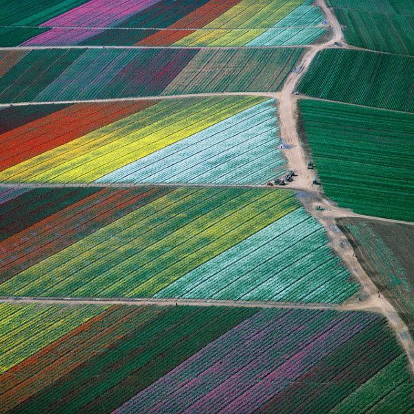 фото цветочных полей
