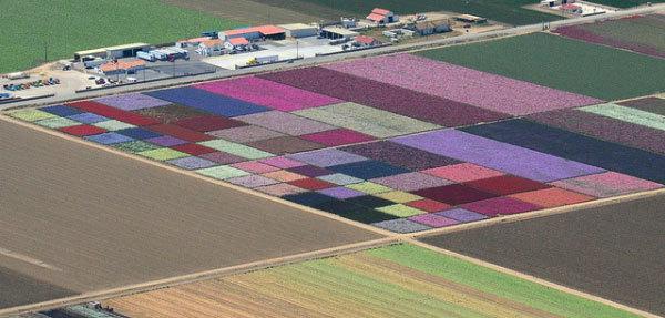 фото цветочных полей (10)