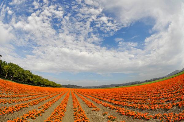 фото цветочных полей (19)
