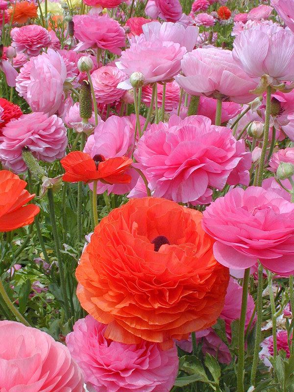 фото цветочных полей (17)