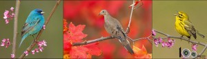 красивые птицы фото
