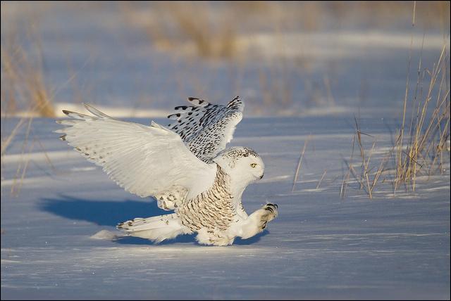 красивые птицы фото (11)