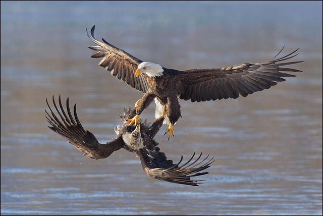 красивые птицы фото (9)