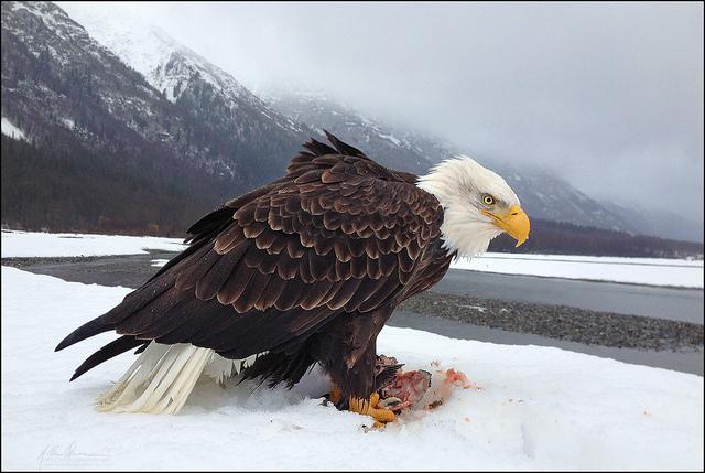 красивые птицы фото (8)
