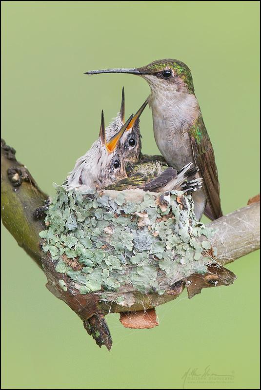 красивые птицы фото (7)