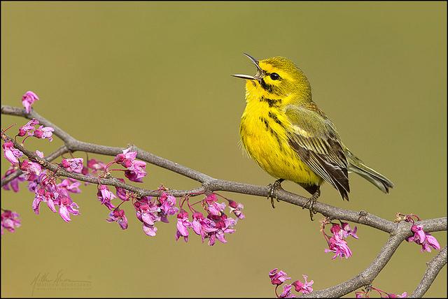 красивые птицы фото (5)