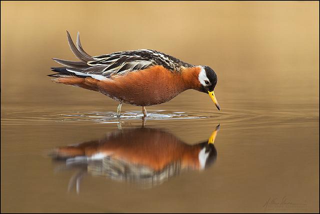 красивые птицы фото (4)
