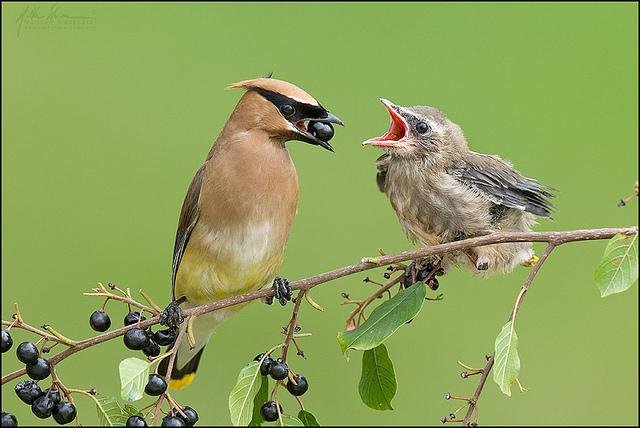 красивые птицы фото (3)
